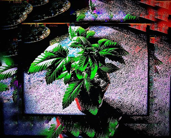 'sDoughter🍁 Plants 🌱 Marihuana Backgrounds Outdoors Day No People Multi Colored Close-up EyeEmNewHere