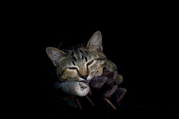 time to sleep.