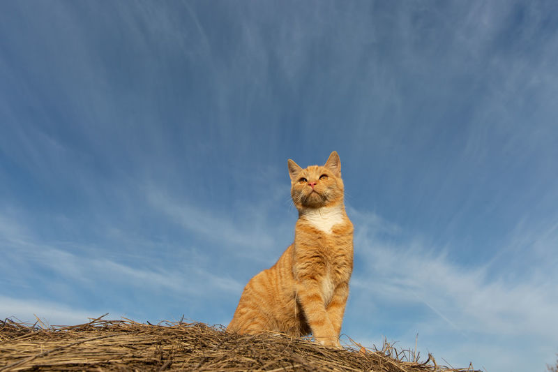 Poland Katze Cat Redcat Mammal Animal Themes Animal Domestic Animals Pets Domestic Sky One Animal Cloud - Sky Feline Low Angle View Nature No People Day Looking Looking Away Sitting Domestic Cat Ginger Cat Whisker Vertebrate