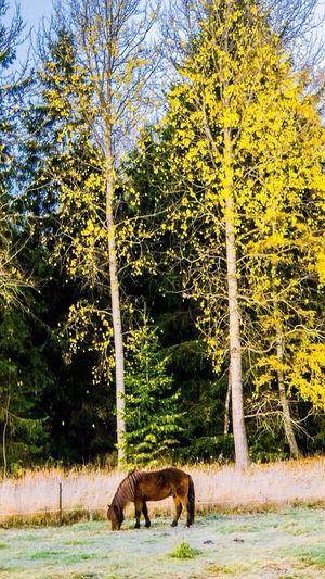 Animals Colors Of Autumn Landscape_Collection EyeEm Best Shots