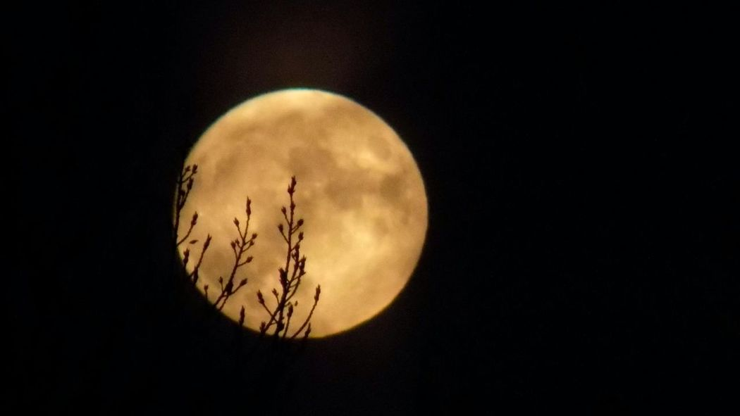 Moon Full Moon Night Nature No People Moon Surface Astronomy Space Sky Planetary Moon Scenics Tranquil Scene Love ♥