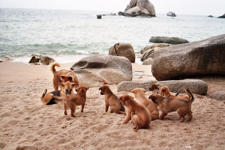 Large group of dogs on beach