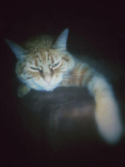 My cat lounging
