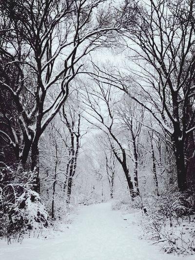 Brooklyn Blizzard ~ Prospect Park 2014 Blackandwhite EyeEm Best Shots AMPt_community Snow