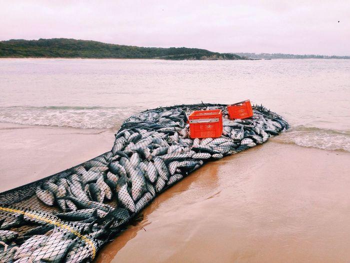 Fish Fishing Shore Remote Net Food Ocean Swim Beach Landscape Australia Scales Island