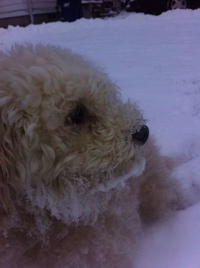 My doggy is a snow dog. Lol he was playing in the snow when I took him out this morning.