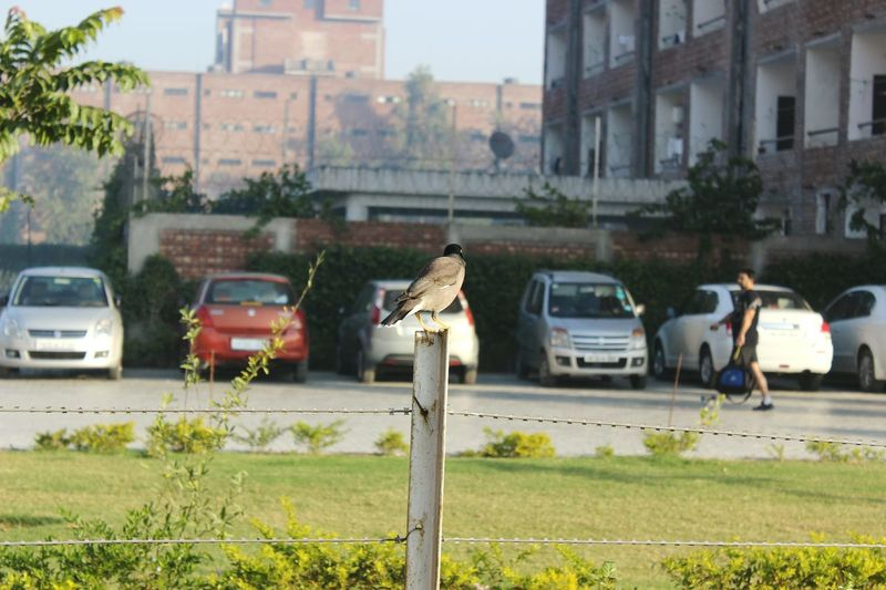 Ia this bird looking at that guy Taking Photos Check This Out Think About This Nature Conversation His Life Of View The Present Scenario