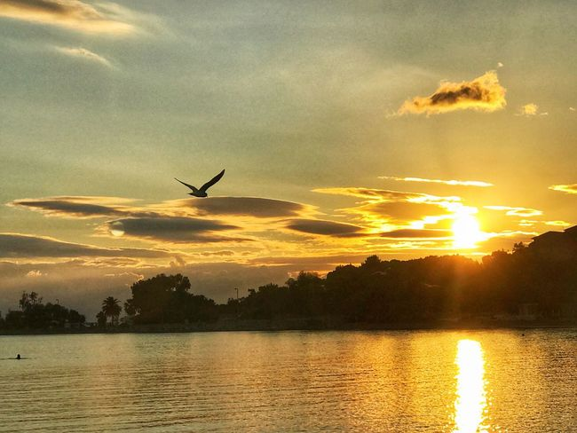 Sunset Silhouette Nature Beauty In Nature Flying Sky Scenics Reflection Water Cloud - Sky Animal Themes Lake Tranquil Scene Tranquility Animals In The Wild One Animal Bird No People Outdoors Waterfront