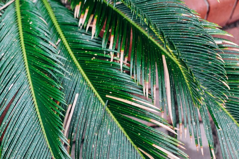 Palm leaves texture Contrast Stylish Fashion Summer Deep Green Color Ecology Tropical Fresh Texture Green Color Plant Leaf Growth Palm Leaf Plant Part Nature Palm Tree Close-up Beauty In Nature Day No People Outdoors Tree Tropical Climate Natural Pattern Pattern Leaf Vein Full Frame Backgrounds