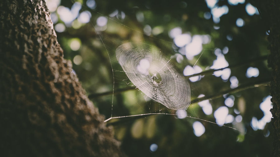 Low Angle View Of Spider Web By Tree Trunk At Forest