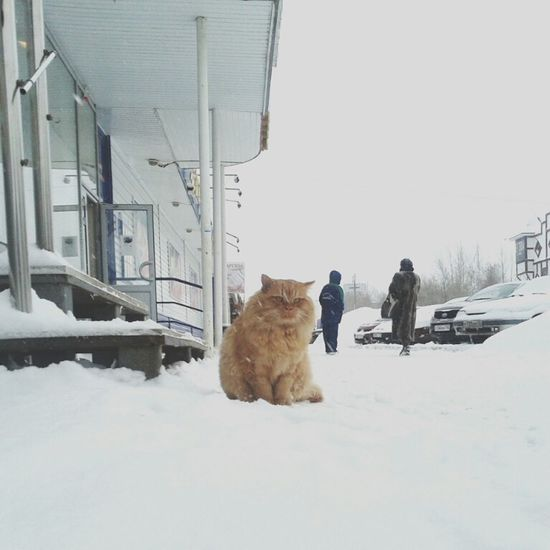Cat's World Snow ❄ Wintertime Cold Check This Out Relaxing Enjoying Life Hello World Simple Things In Life