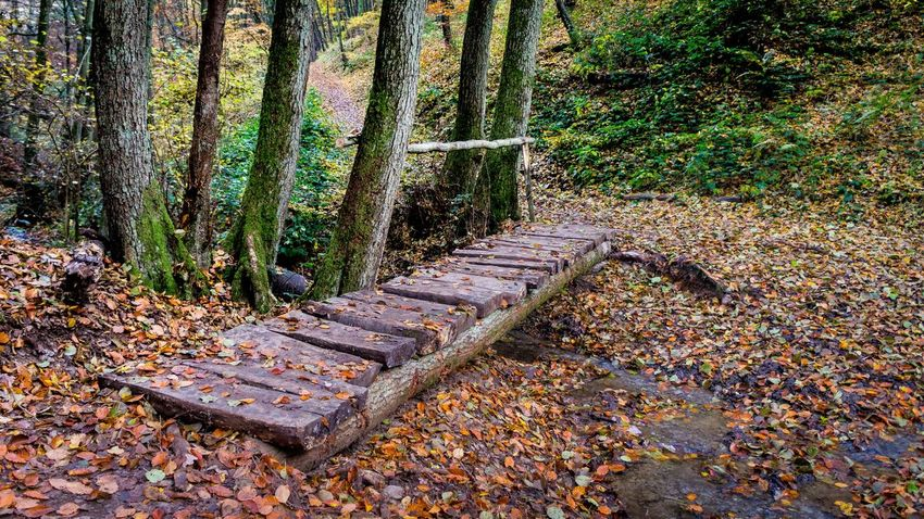 Autumn Colors Bridge Fall Beauty Footpath Forest Landscape Outdoors The Way Forward Tree Tree Trunk Showcase: November