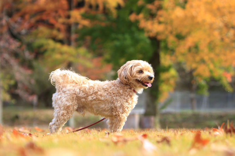 Autumn doggies