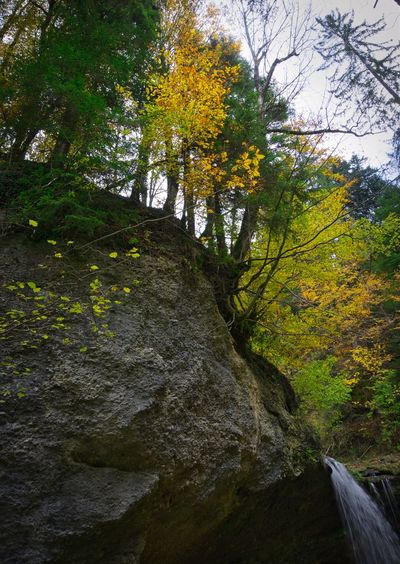 Floating Water Waterfall Creek Allgäu Autumn Tree Plant Beauty In Nature Growth No People Nature Green Color Forest Outdoors Non-urban Scene Water Tranquility Low Angle View