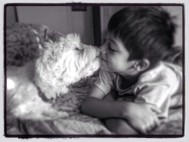 I Love My Dog Dog My Kid Kid