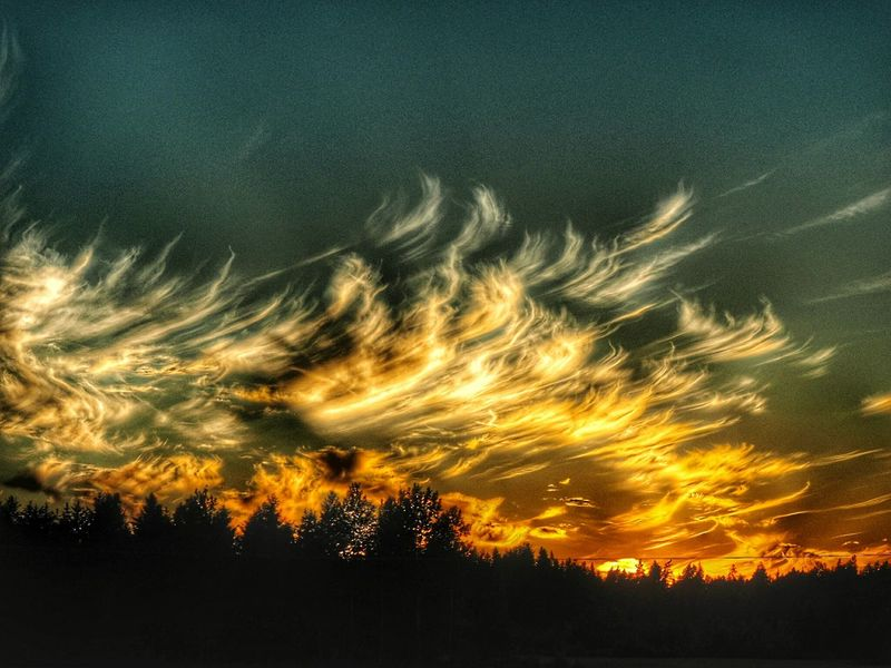 Dramatic Sky Sky Low Angle View Silhouette Sunset Beauty In Nature Nature Scenics Outdoors No People Tree Night Finland Enjoying Nature Summer Beauty In Nature EyeEm Selects Colours Of Nature Beauty Midsummer Night Midsummer In Finland