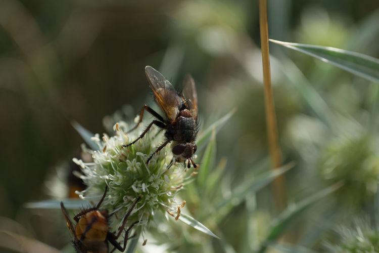 Fliege One