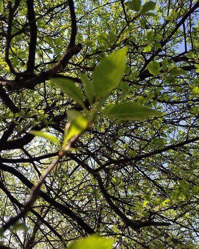 веснавразгаре зелень  зеленый листики