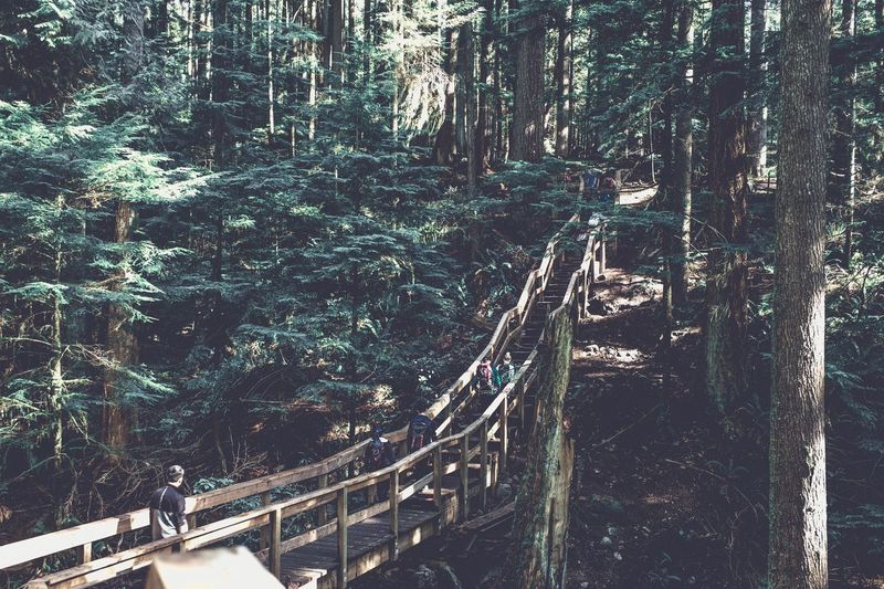 Tree Forest Day Outdoors Nature High Angle View Growth Real People Footbridge Beauty In Nature People