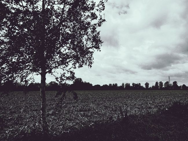 Cloud - Sky Tree Field Sky Landscape Outdoors Day No People Beauty In Nature EyeEmNewHere Tree Corn Fields Dry Field Dry Corn Corn Field The Week On EyeEm Field Bnw_collection Bnwphotography Bnw Blackandwhite Black And White Black & White Trees And Sky Grass Lost In The Landscape