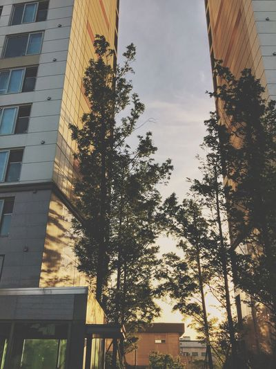 Trees, Sunset Built Structure Tree Plant Building Exterior Nature Low Angle View Sky Day Building Outdoors Sunlight No People City Growth Cloud - Sky Reflection Sunset Boundary Shadow