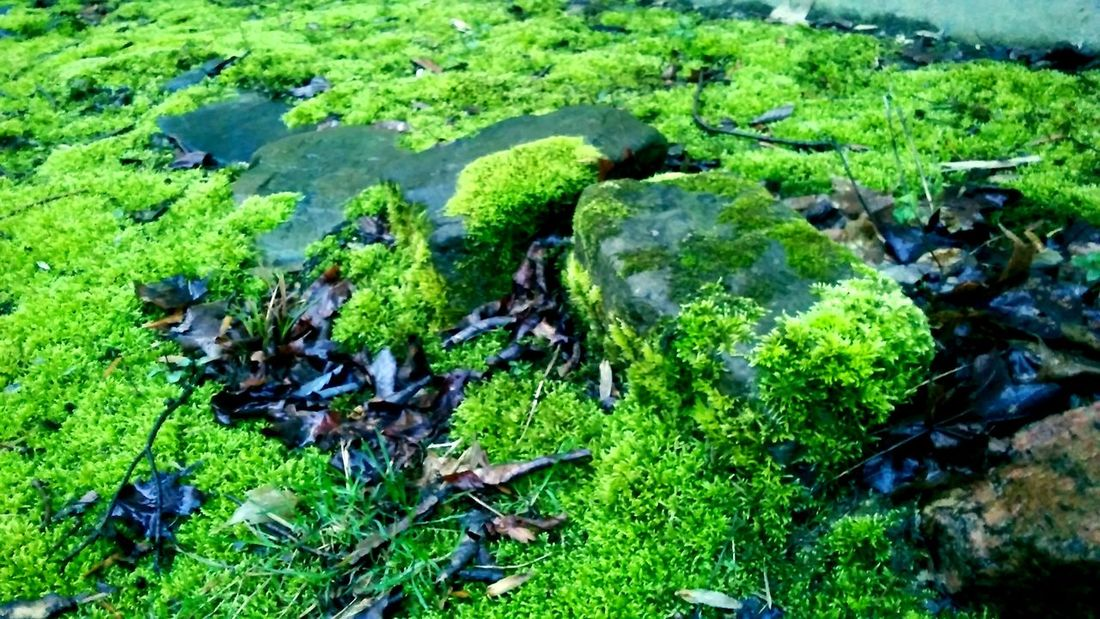 Green Color Nature Growth Outdoors Day No People Close-up Rocks Moss Grass Beauty In Nature EyeEmNewHere
