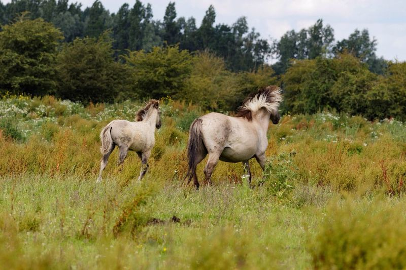 View Of Horses Walking In Field