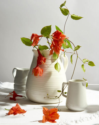 Close-up of flowers and pitchers against white background