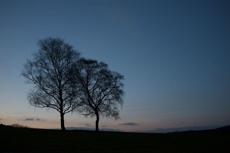 Tree on landscape against clear sky