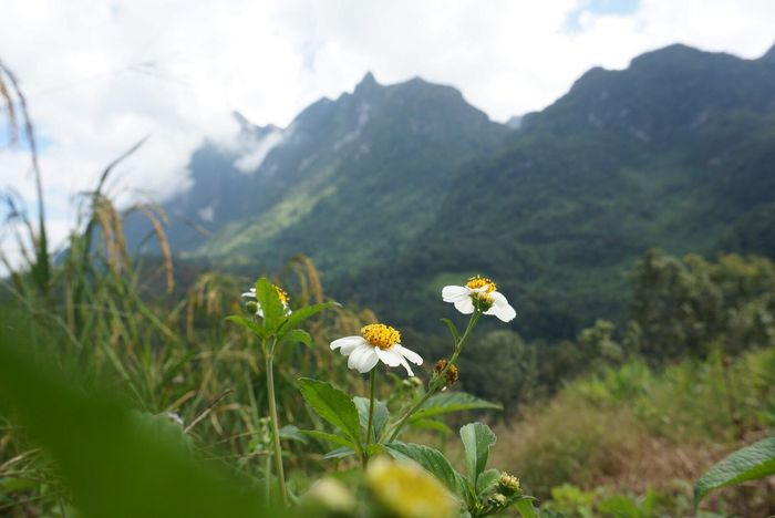 There are flowers. Flower Beauty In Nature Nature Freshness Blooming Plant Outdoors Enjoying Nature Enjoying Life Relaxing Flowers In Nature  Chiang Dao Chiang Mai   Thailand