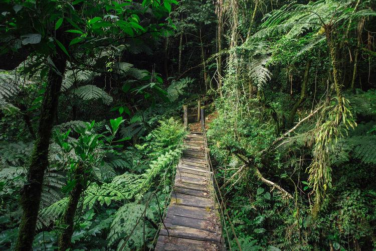 Bosque Nature Photography Veracruz Beauty In Nature Bridge Direction Outdoor Photography Outdoors Permaculture Rainforest