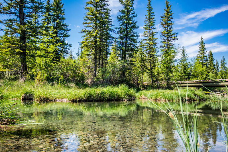 Alberta Blue Calgary Calgary, Alberta Canada Canada Coast To Coast Discovery Ridge Forest Forest Photography Green Griffith Woods Park Nature Plants Sky Tree YYC