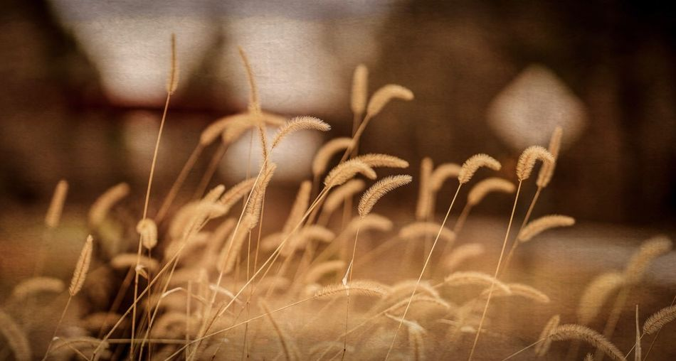 Growth Plant Focus On Foreground Close-up Beauty In Nature Nature No People Tranquility Field Selective Focus Fragility Grass Outdoors Land