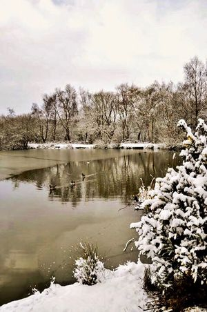 Snow ❄ Tree Nature Water Lake Beauty In Nature Day Outdoors No People Tranquil Scene Animal Themes Tranquility Animals In The Wild Reflection Bird Sky Scenics Winter Plant Bare Tree Growth