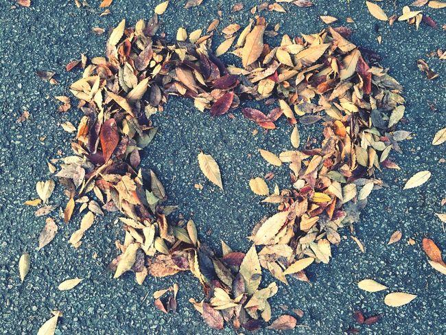 가을 낙엽 사랑 First Eyeem Photo