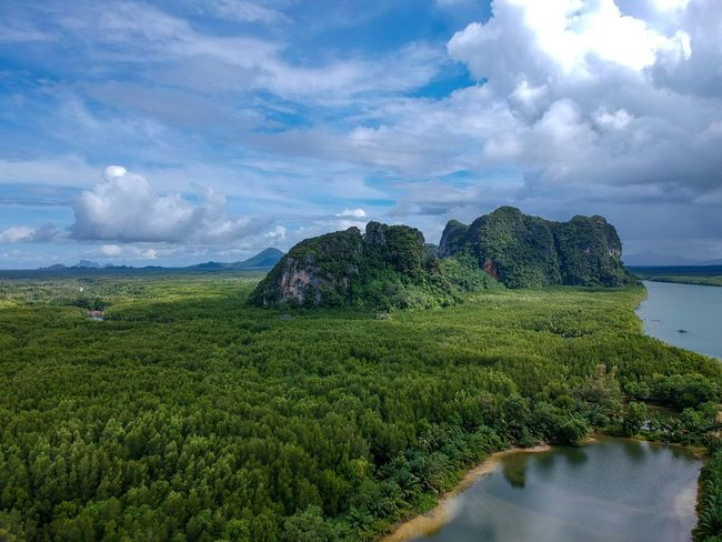 landscape nature, mangrove forest High Angle View Drone  Relaxing Forest Hill Backgrounds Thailand Mountain Travel Photography Heaven Hill Sky Cloud - Sky Plant Water Beauty In Nature Growth Tranquility Field Outdoors Land Tranquil Scene Tree Hedge No People Green Color Nature Scenics - Nature Environment Sea
