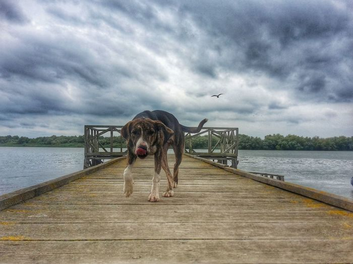 Portrait of dog on lake against sky