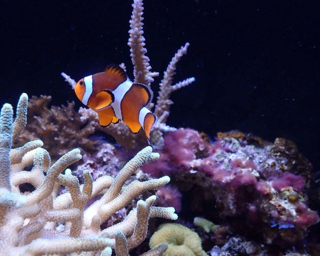 Underwater Animal Themes Sea Life Fish Beauty In Nature Swimming