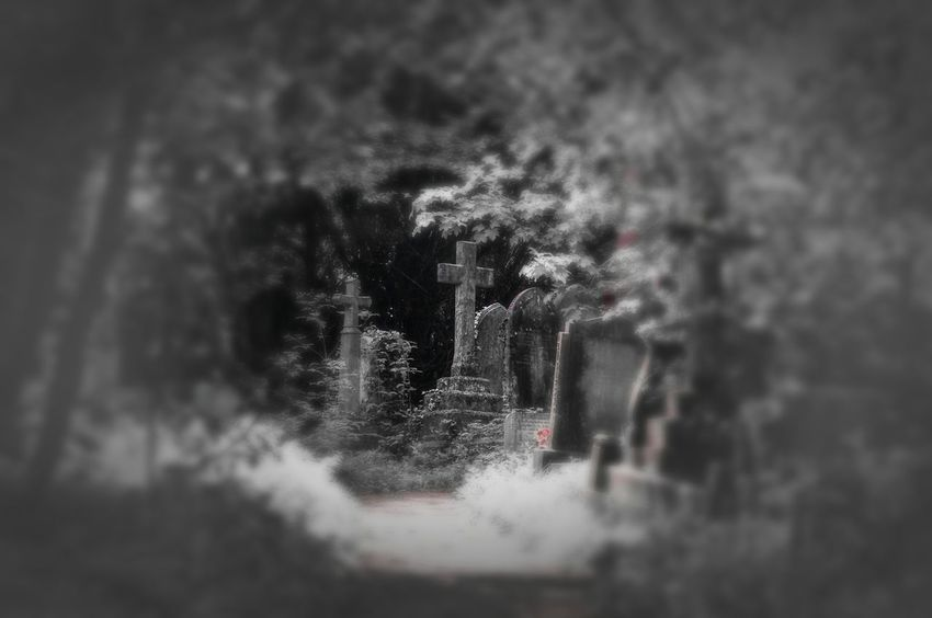 Rundown Cemetery Black And White Carmine Edit Walking Around The Cemetery Bristol Uk Relaxing Taking Photos Nature On Your Doorstep Nature