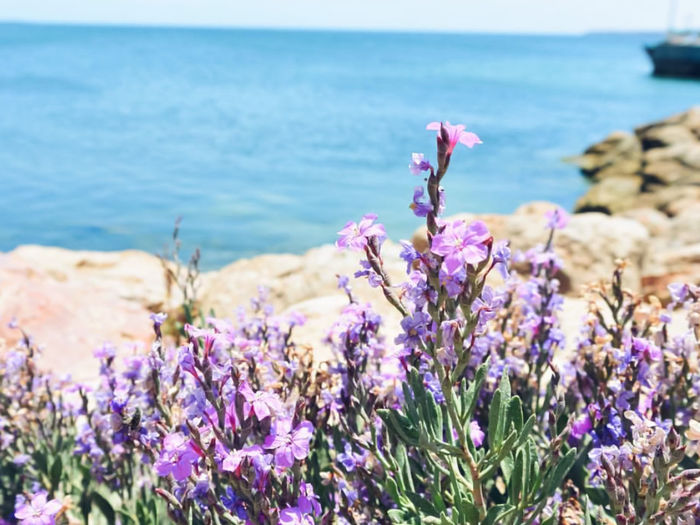 Close-up of purple flowering plants by sea