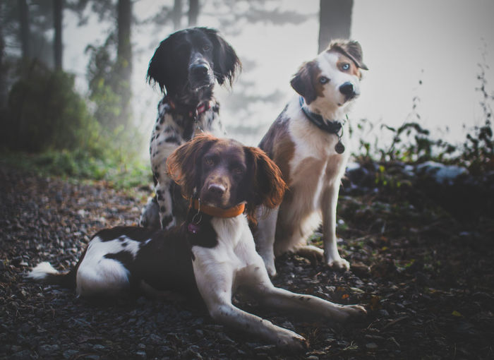 EyeEmNewHere Dog Pets Animal Domestic Animals Labrador Retriever Outdoors Portrait Mammal Friendship Day Togetherness Protruding No People Animal Themes Retriever Nature EyeEm Ready   AI Now