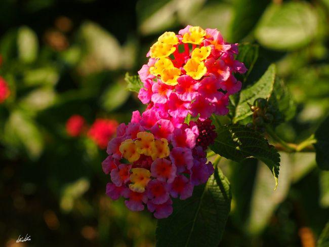 光と影 E-PL3 Flower Light And Shadow No Edit/no Filter