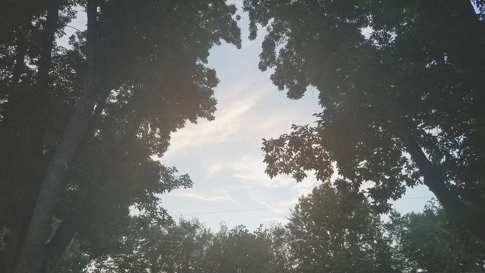 Tree Forest Nature Sky Outdoors Cloud - Sky Pinaceae Beauty In Nature Day Silhouette Low Angle View Landscape No People Mountain Tree Area
