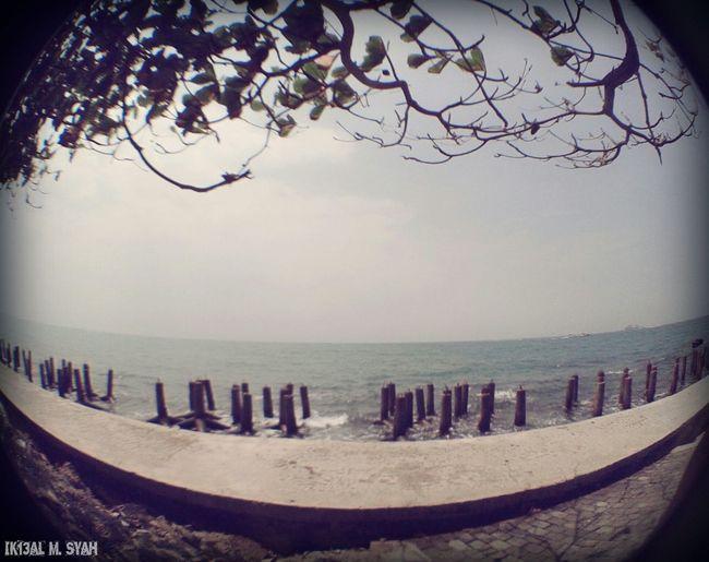 Beach Sky And Sea Fish Eye Tree