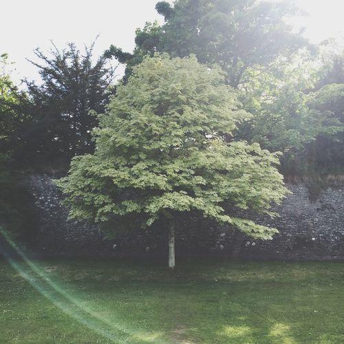 🌳 Instagram @benmmillar Tree