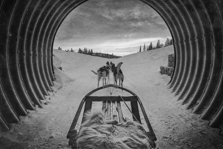 Siberian Huskies Pulling Sled In Tunnel