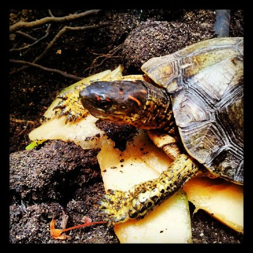 This morning's breakfast guest brought to you by turtle.