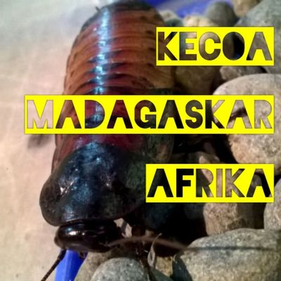 Kecoa ini lokhh paling gede. Yuk lihat di dunia dino @jungleland_indo Dunia dino