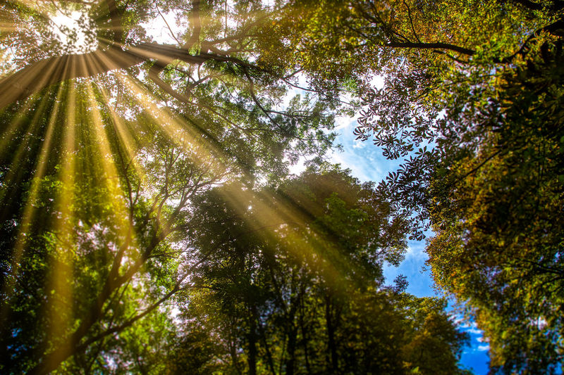 Beauty In Nature Branch Day Forest Green Color Growth Leaf Low Angle View Nature No People Outdoors Scenics Sky Sunbeam Sunlight Tranquil Scene Tranquility Tree