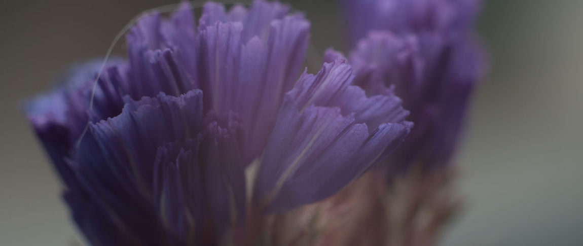 Background Backgrounds Close-up Color Day Drop Flower Flowers Macro Macro Photography Nature Nature Nature Photography Naturelovers No People Outdoors Spring Violet